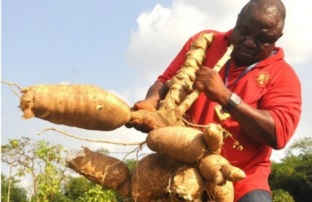 1.1.5 Exciting reasons to consider African agribusiness 3