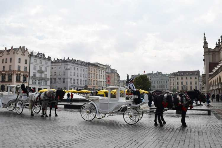 study abroad krakow