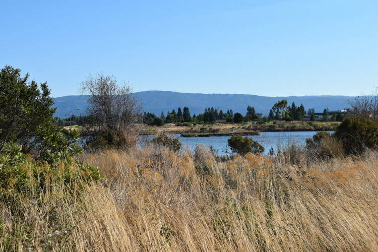 shoreline park mountain view travel