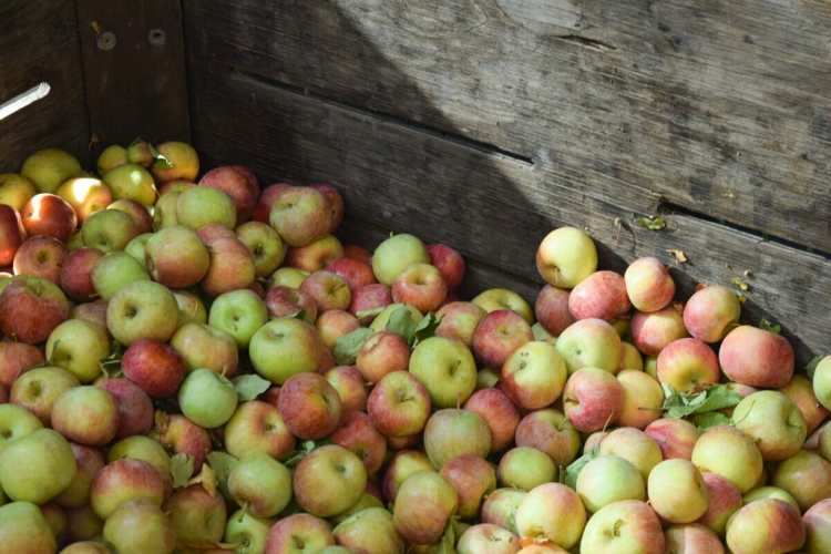 The Best Apple Hill Farms to Visit In The Fall