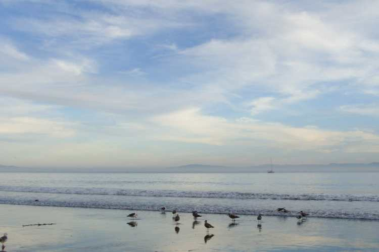 7 Things To Do In Santa Cruz