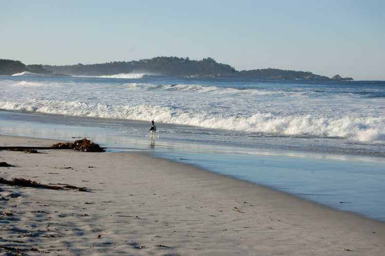 things to do in carmel