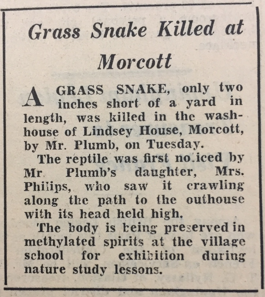 Grass Snake Killed at Morcott