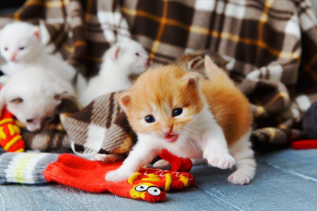 Babykatzen Kaufen Ein Kitten Zu Hause Willkommen Heißen