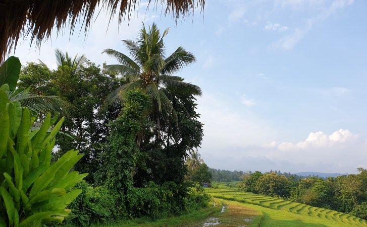 @DharmaOasis BambooHouse view
