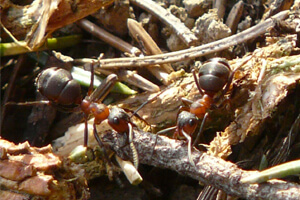 Learning Efficient Food Distribution From Ants To Ensure Food Security