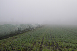 Use Of Natural Plant Species In Harvesting Water From Fog