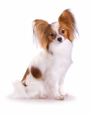 Small Dog Breeds The Smart Dog Guide