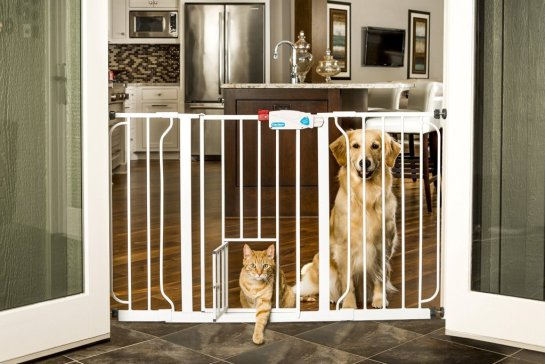 Dog Gates The Smart Dog Guide