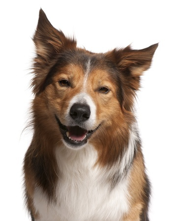 Male Dog Names   The Smart Dog Guide