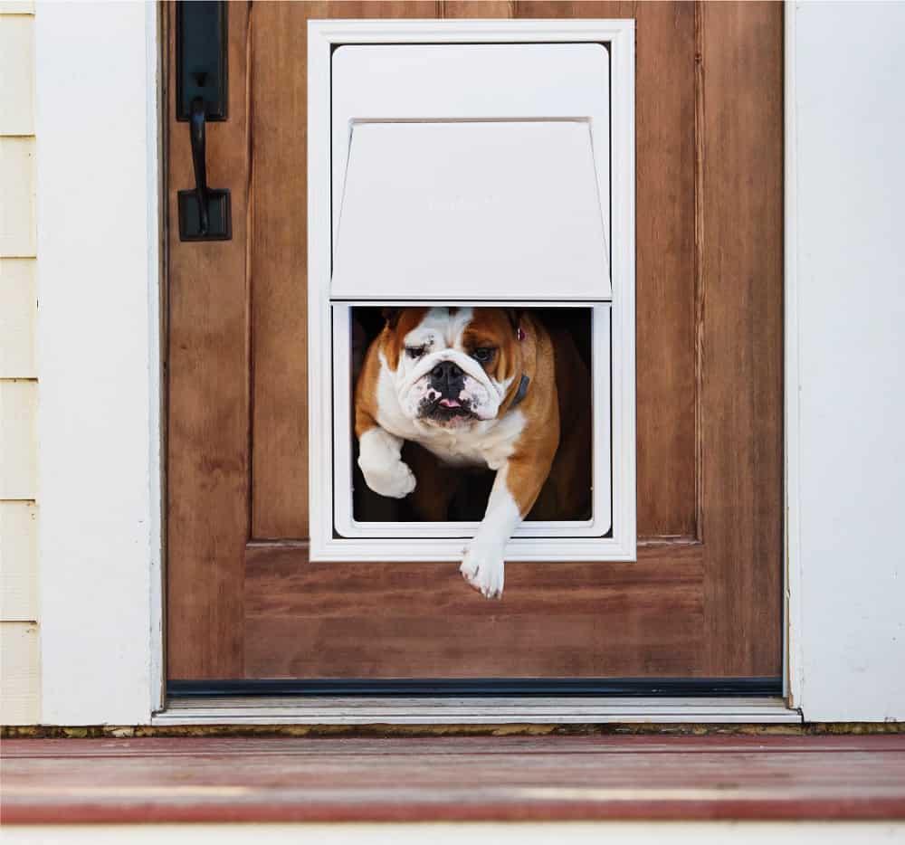 Best Electronic Dog Doors (September 2019) - Buyer's Guide ...