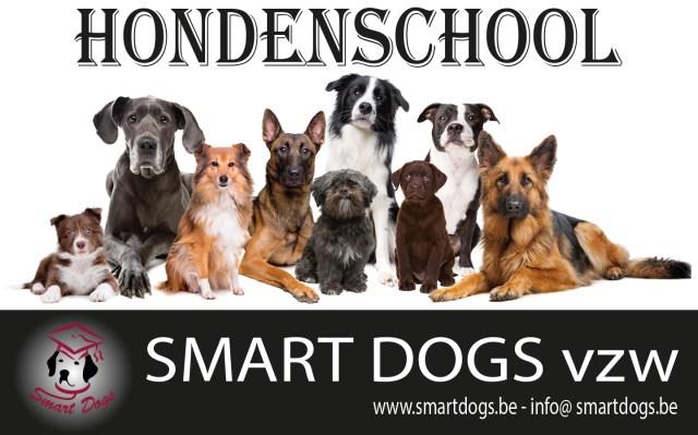 Afbeelding met hond, foto, verschillend, neerleggen Automatisch gegenereerde beschrijving
