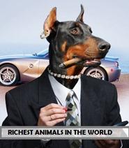 Richest animals in the world