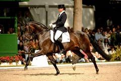 Poetin horse