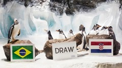 Penguins Alf, Lolly and Ginny Animals That Can Predict FIFA Winning Team