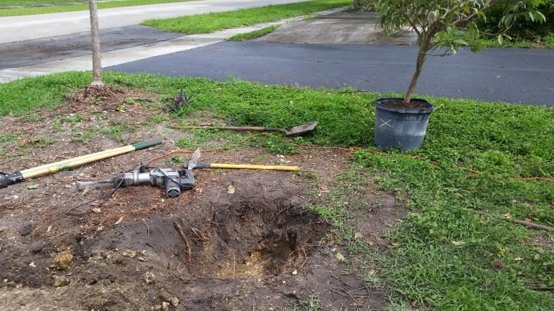 Planting Lychee-02