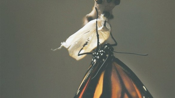 Inkubator-Modelle: Das Marketing als Speerspitze