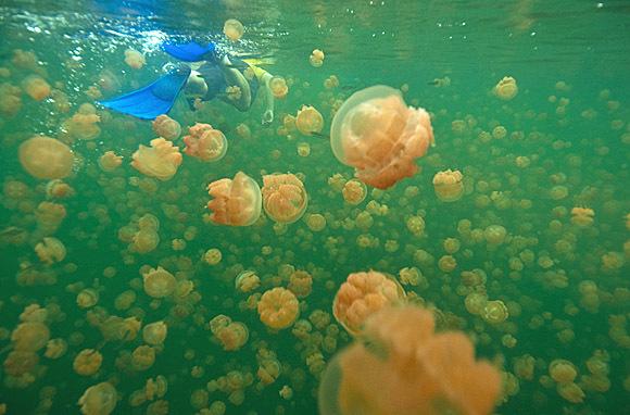Rock Islands, Palau: Jellyfish Lake