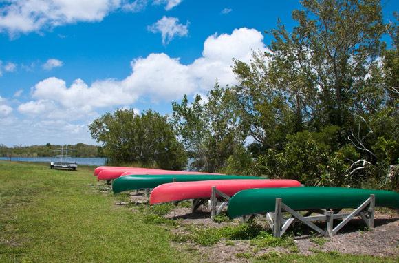 Swamp Fun In Everglades National Park