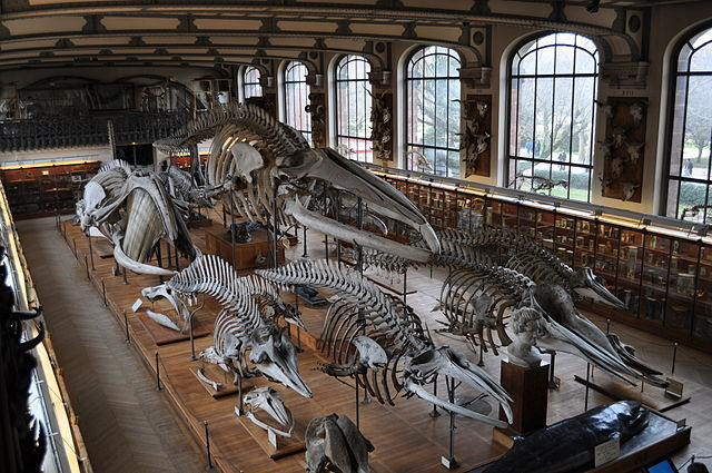 Galleries of Paleontology and Comparative Anatomy, Paris, France
