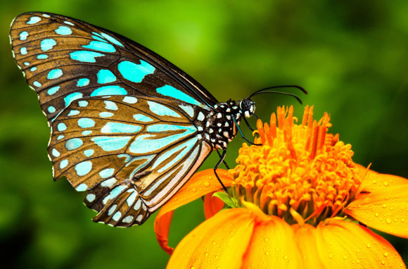 The Conservatory, Butterfly Wonderland, Arizona