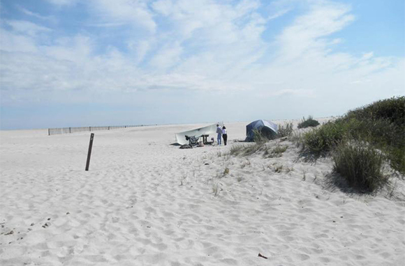 Camping with Wild Horses, Assateague Island, Maryland