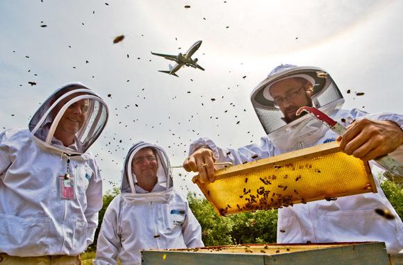 Bees Sweeten Travel