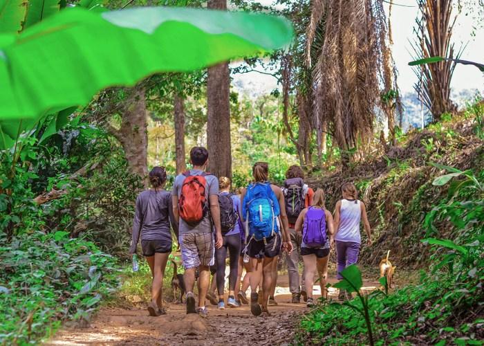 group of tourists walking through rainforest