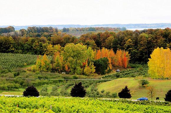 Lake Michigan Shore Wine Country
