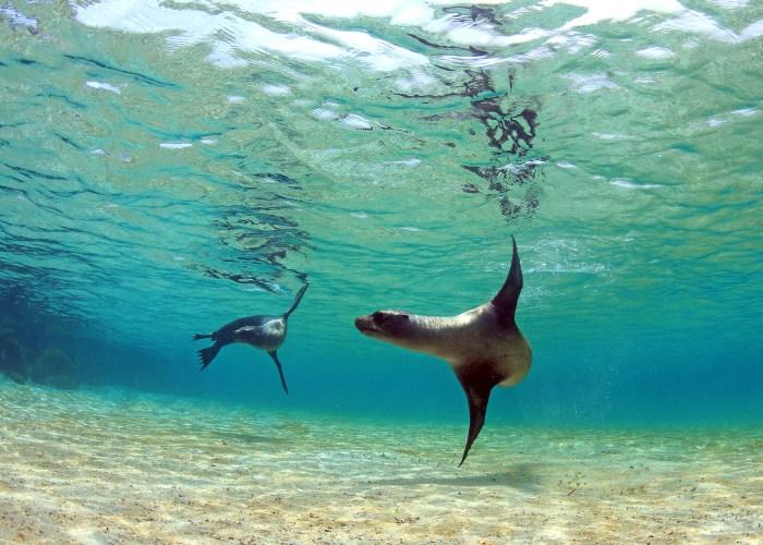 seals in water