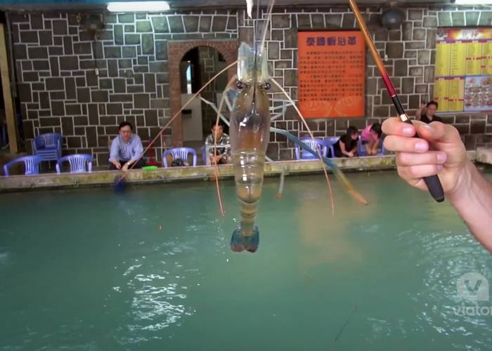 Taipei Shrimp Fishing