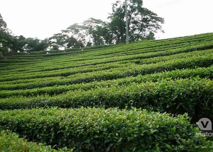 Tea of Taipei Sightseeing Tour