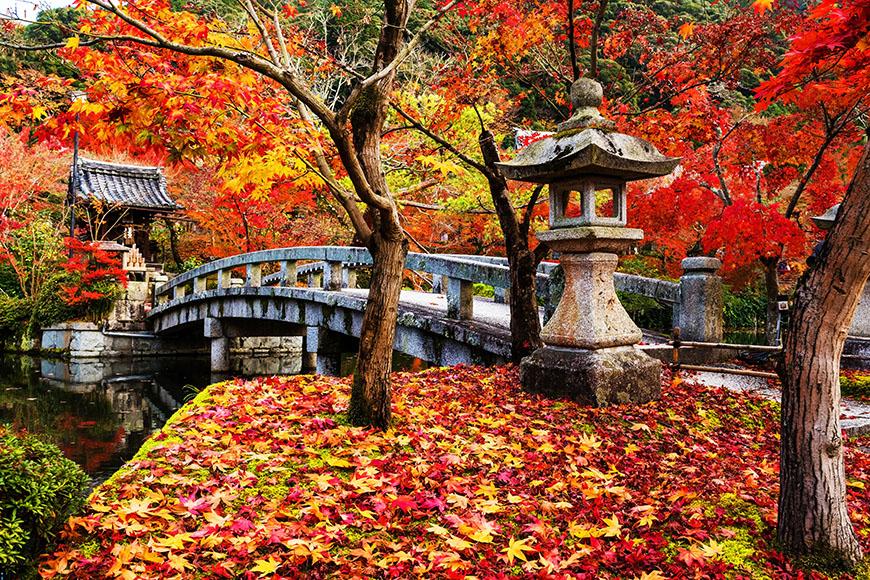 eikando kyoto autumn bridge.