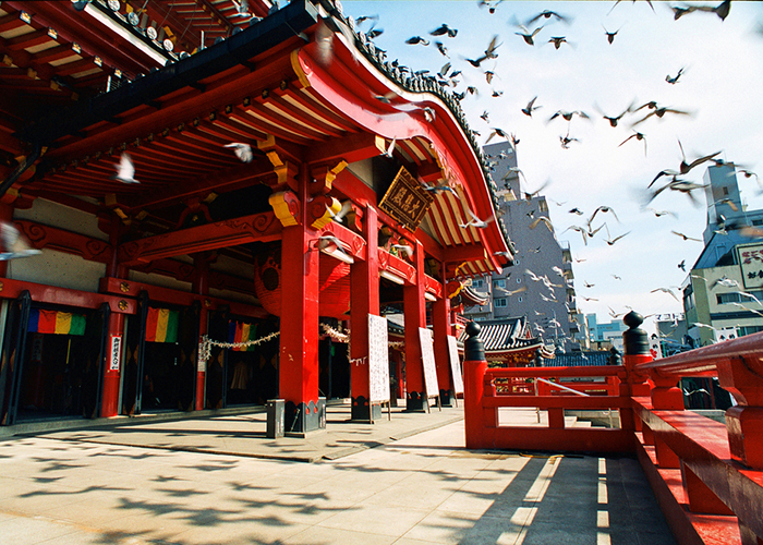 nagoya temple and birds