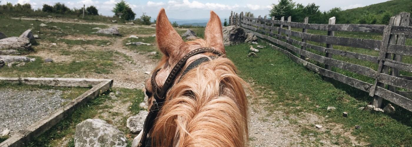 Dude ranch horse