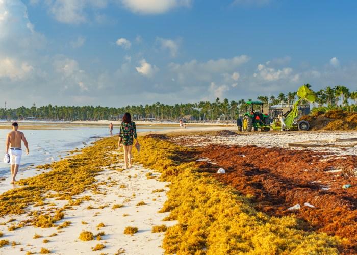 Sargassum Seaweed Invades Caribbean, Florida, and Mexico Beaches