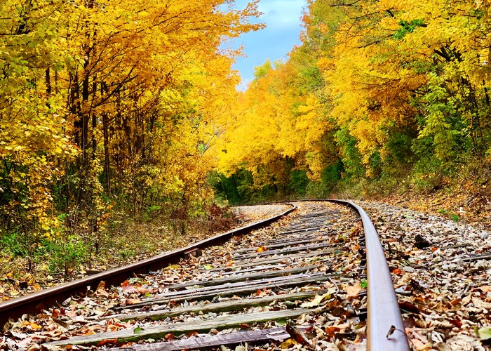 train tracks with fall foliage.