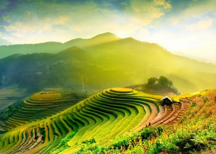 Terraced rice fields in YenBai, Vietnam