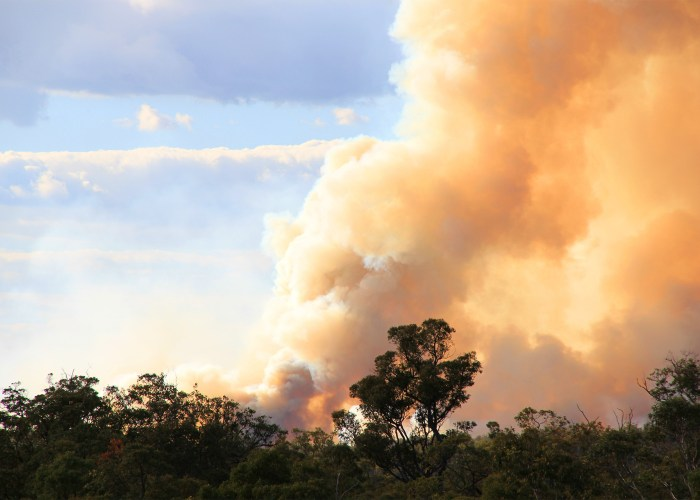 What Travelers Need to Know about the Australia Fires (and How to Help)