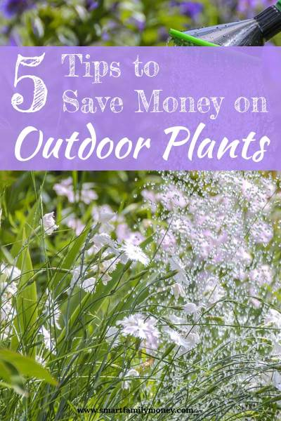 5 Tips for Saving Money on Outdoor Plants