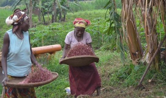 Health-Boosting, Climate-Smart Crops Can Help Address Micronutrient Gaps