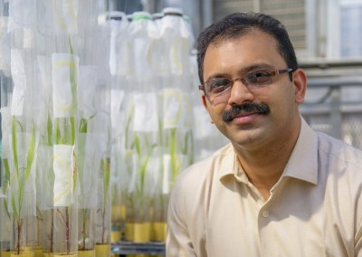 Study of sorghum-munching aphids earns NSF award