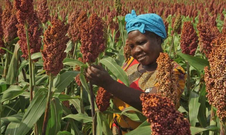 MILLETS AND SORGHUM: FORGOTTEN FOODS FOR THE FUTURE