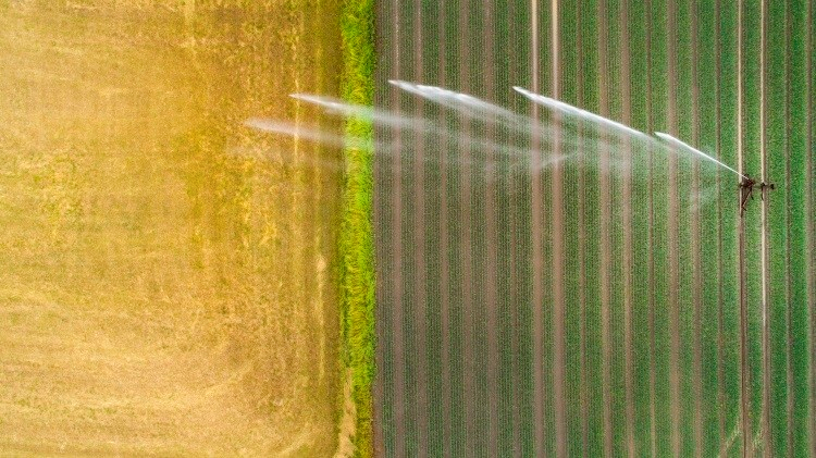More drop per crop: Cereal water footprint study highlights need to transition to ancient grains
