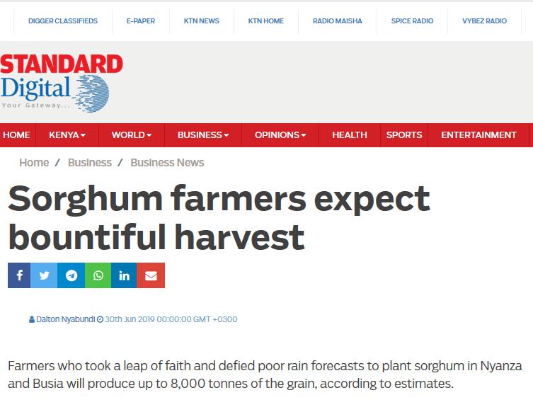 Sorghum farmers expect bountiful harvest