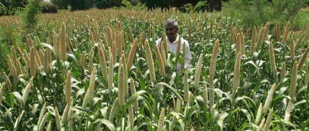 Here is how millets can make India's food basket climate-resilient