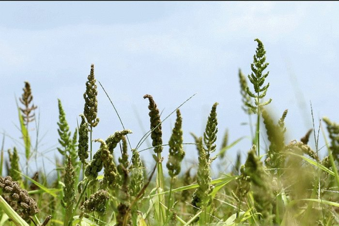 Millet revolution: Important to debate implementation