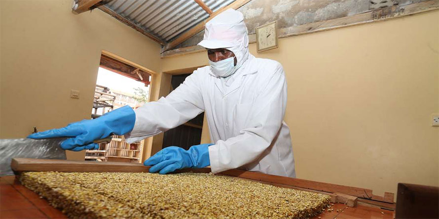 Turning millet into snacks spices up traders' revenues