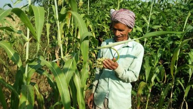Smallholders cultivating Millets to make their food production climate resilient