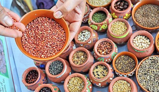 Millets boost growth of adolescent children: Study